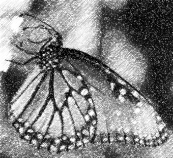 buterfly_photo_to_pencil_sketch