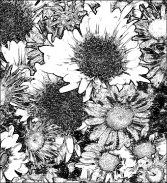 flowers_photo_to_pencil_drawing