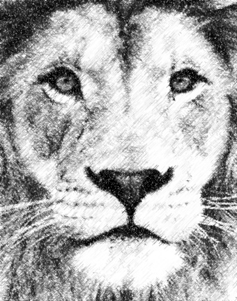 lion_photo_to_pencil_sketch