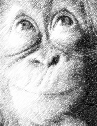 monkey_photo_to_pencil_sketch