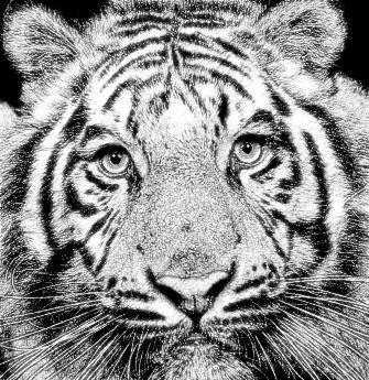 Realistic Pencil Sketch Photo Effect 13