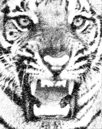 tiger_photo_to_pencil_sketch