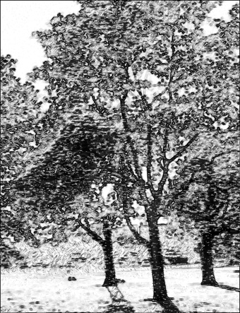 trees_photo_to_pencil_drawing